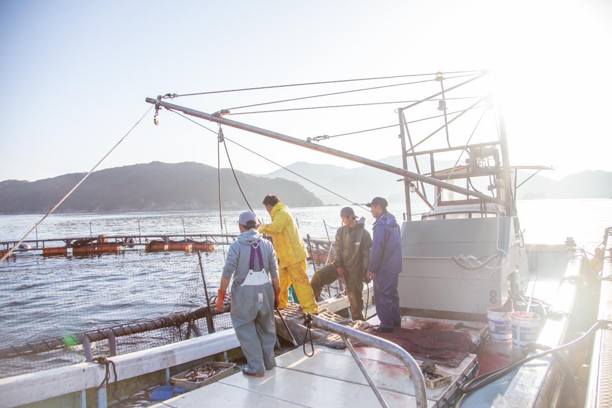 船上で作業中のクロマグロ養殖家たち